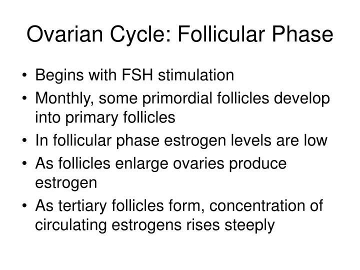Ovarian Cycle: Follicular Phase