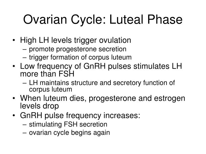 Ovarian Cycle: Luteal Phase