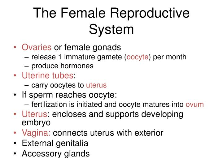 The Female Reproductive