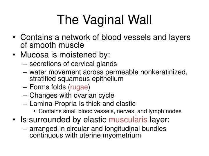 The Vaginal Wall