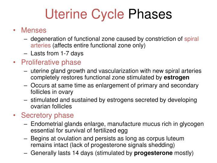 Uterine Cycle