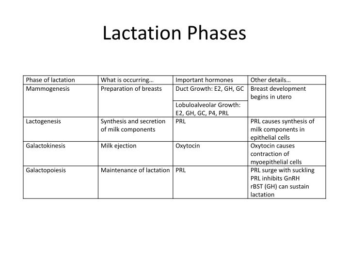 Lactation Phases