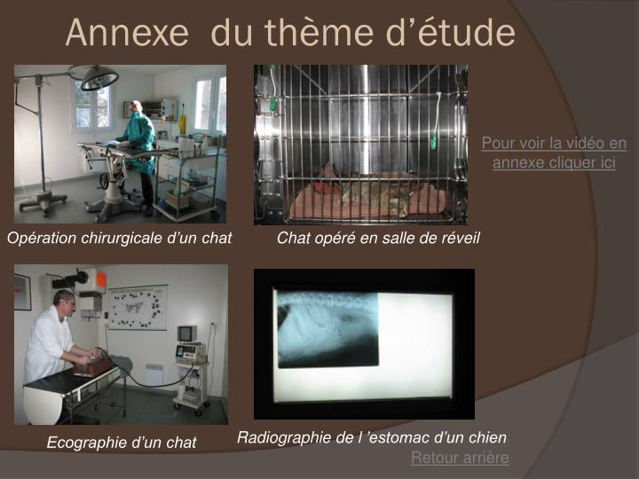 Annexe  du thème d'étude