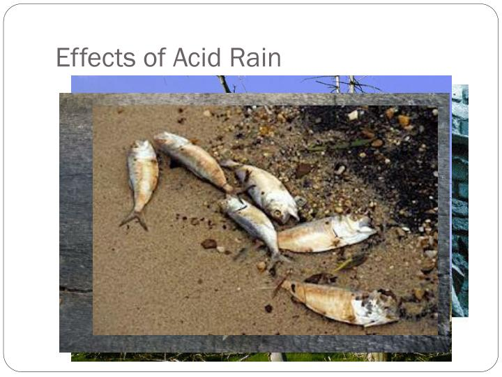 a report on acid rain causes and effects What causes such a dramatic increase  , so acid-rain effects are felt  between calcium carbonate and sulfuric acid (the primary acid component of acid rain).