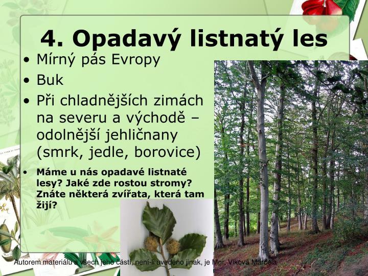 4. Opadavý listnatý les