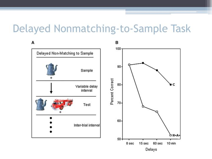 Delayed Nonmatching-to-Sample Task