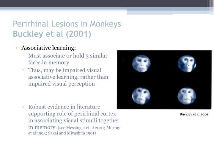 Perirhinal Lesions in Monkeys