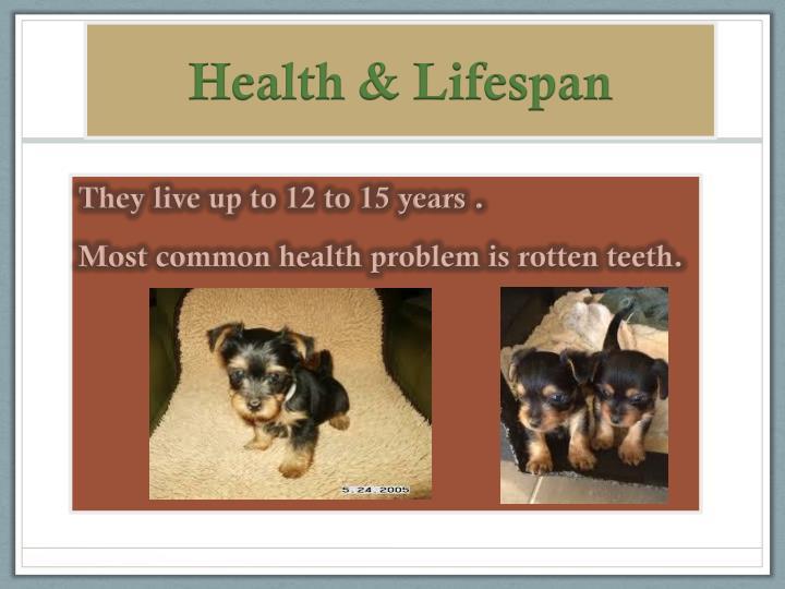 Health & Lifespan