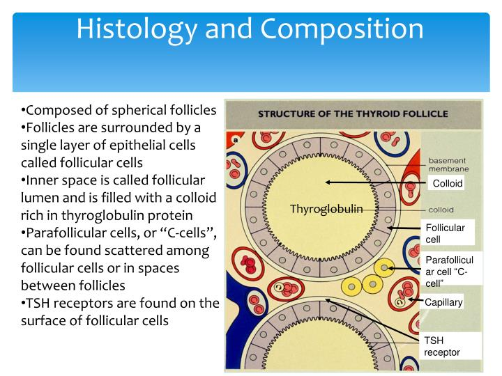 Histology and Composition