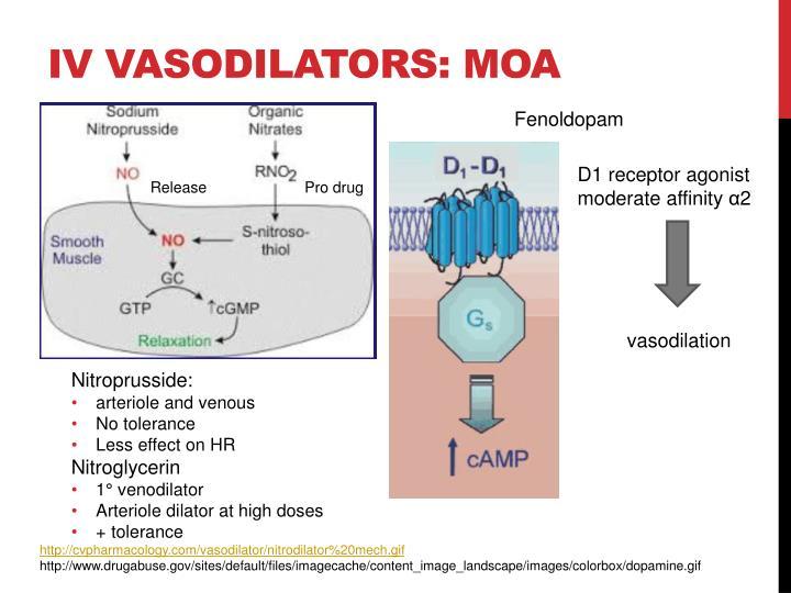 IV vasodilators: MOA