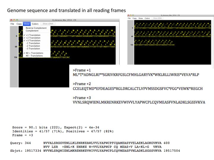 Genome sequence and translated in all reading frames