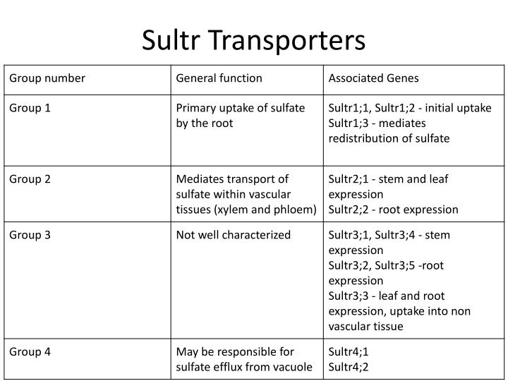 Sultr
