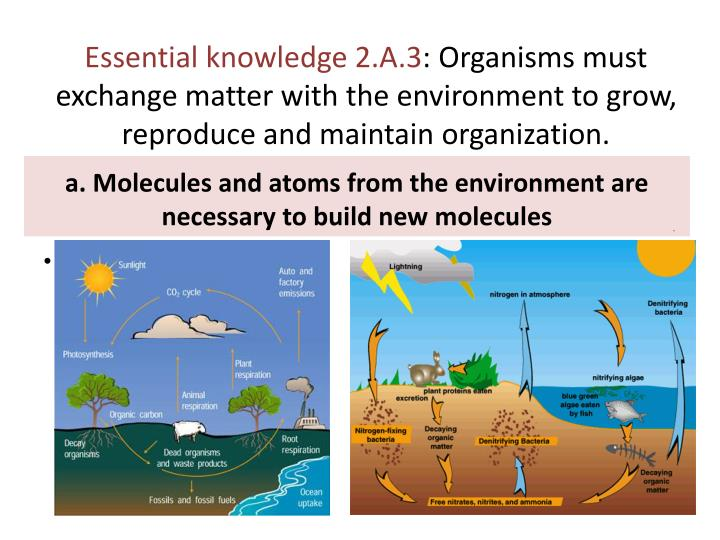 Essential knowledge 2.A.3