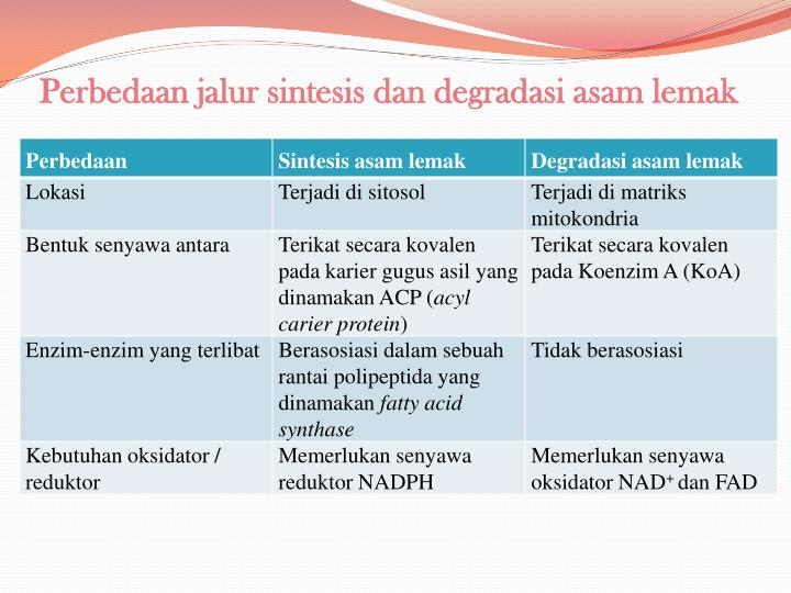 Perbedaan jalur sintesis dan degradasi asam lemak