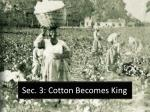 sec 3 cotton becomes king