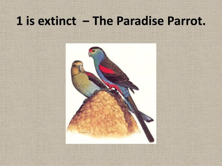 1 is extinct  ‒ The Paradise Parrot.