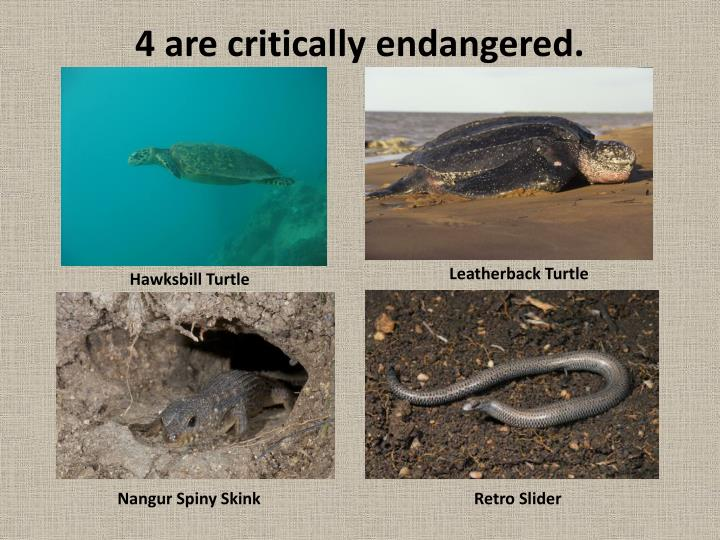 4 are critically endangered.