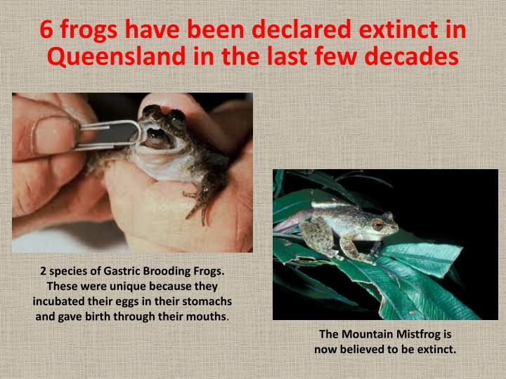 6 frogs have been declared extinct in Queensland in the last few decades