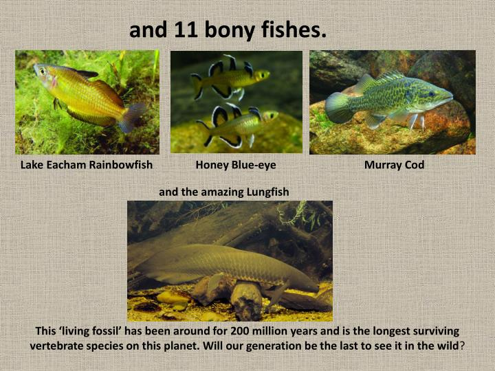 and 11 bony fishes.
