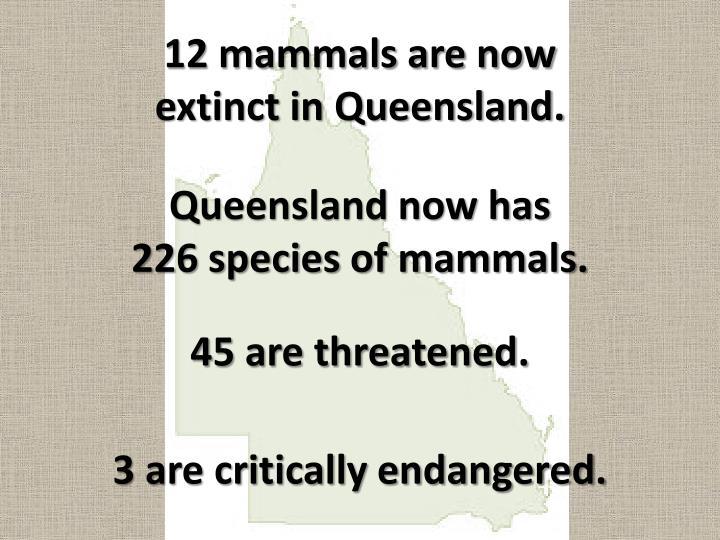 12 mammals