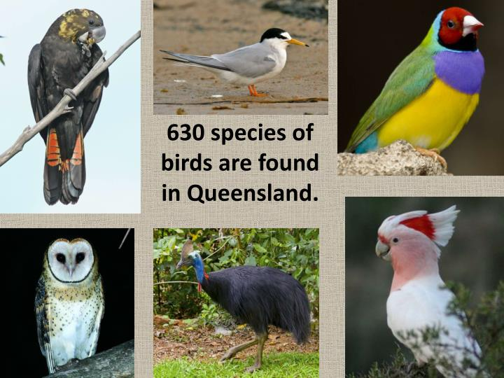 630 species of birds are found in Queensland.