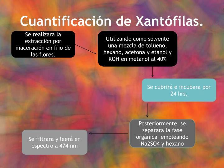 Cuantificación de Xantófilas.