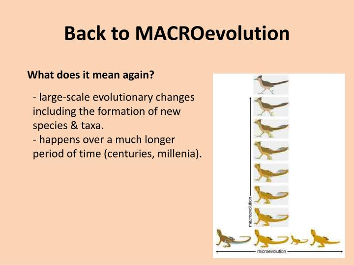 Back to macroevolution