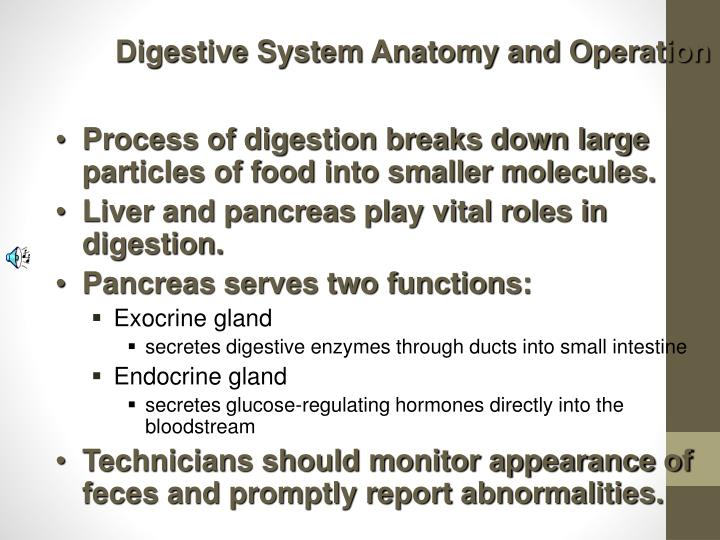 Digestive System Anatomy and Operation
