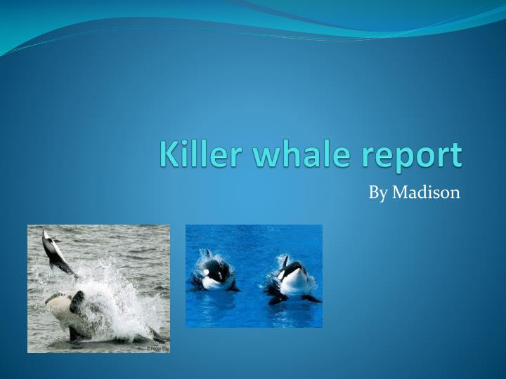 Killer whale report