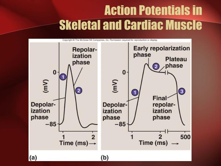Action Potentials in