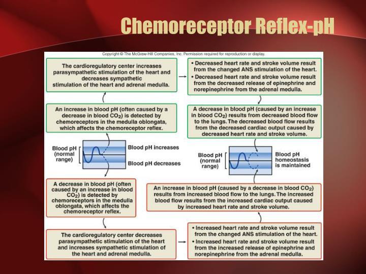 Chemoreceptor Reflex-pH