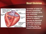 heart skeleton