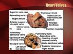 heart valves1