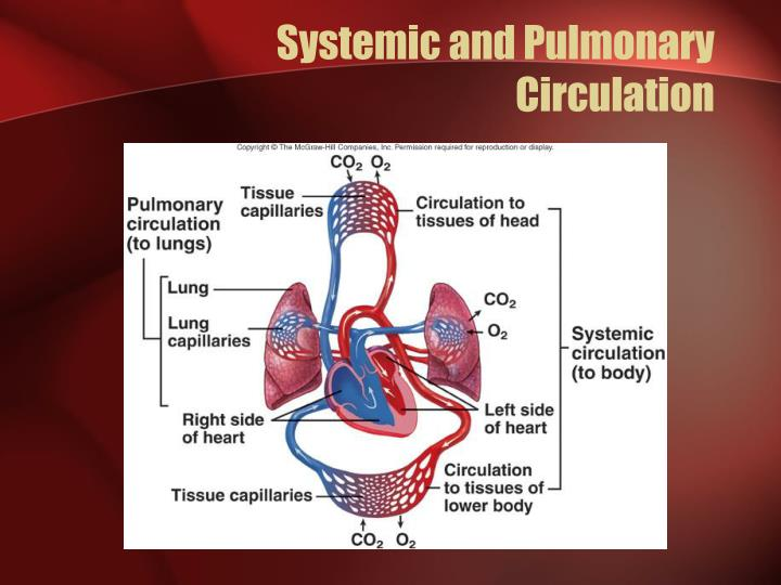Systemic and Pulmonary