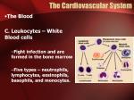 the cardiovascular system4