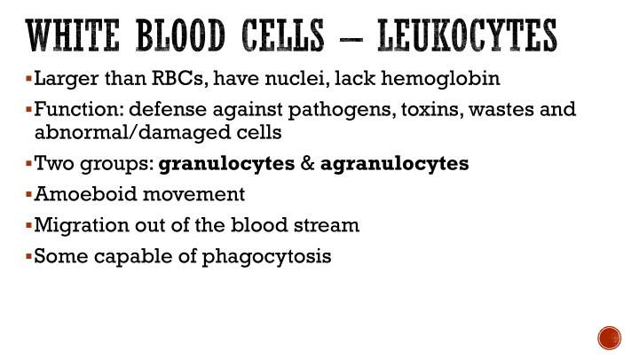 White blood cells – leukocytes