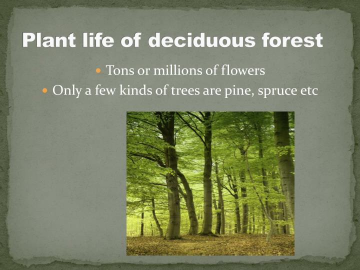 Plant life of deciduous forest