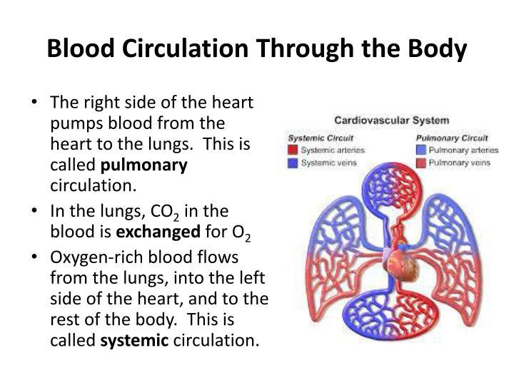 Blood Circulation Through the Body