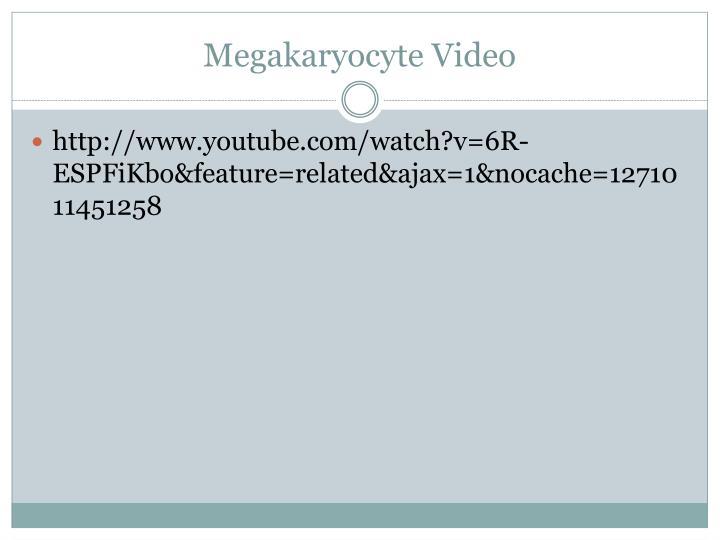 Megakaryocyte