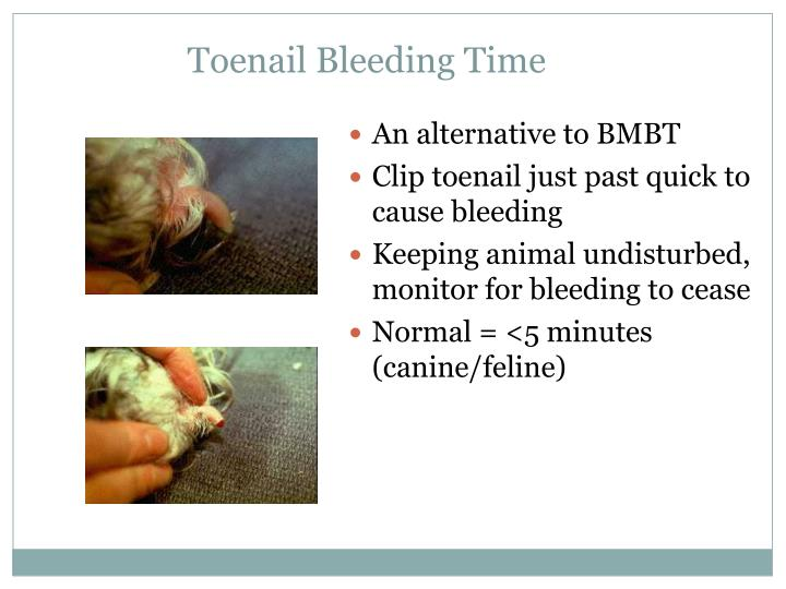 Toenail Bleeding Time