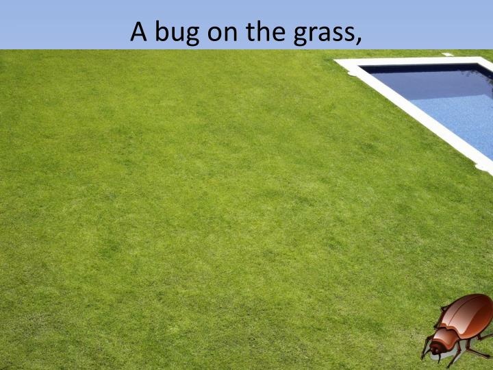 A bug on the grass,