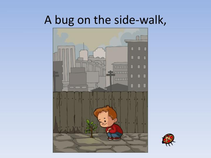 A bug on the side-walk,
