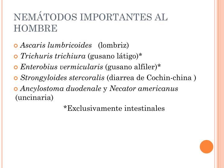 NEMÁTODOS IMPORTANTES AL HOMBRE