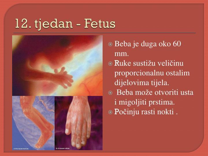 12. tjedan - Fetus