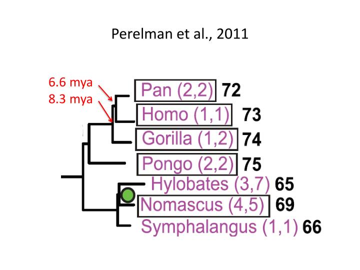 Perelman et al., 2011