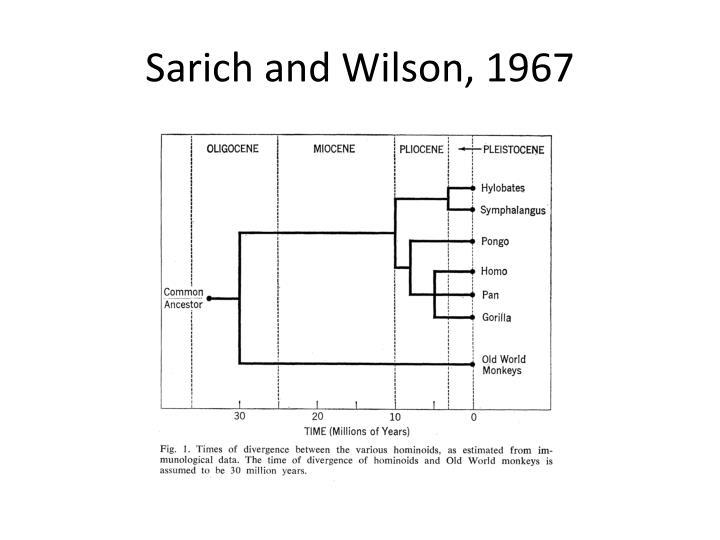 Sarich