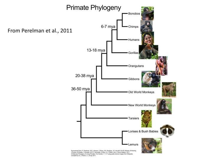 From Perelman et al., 2011