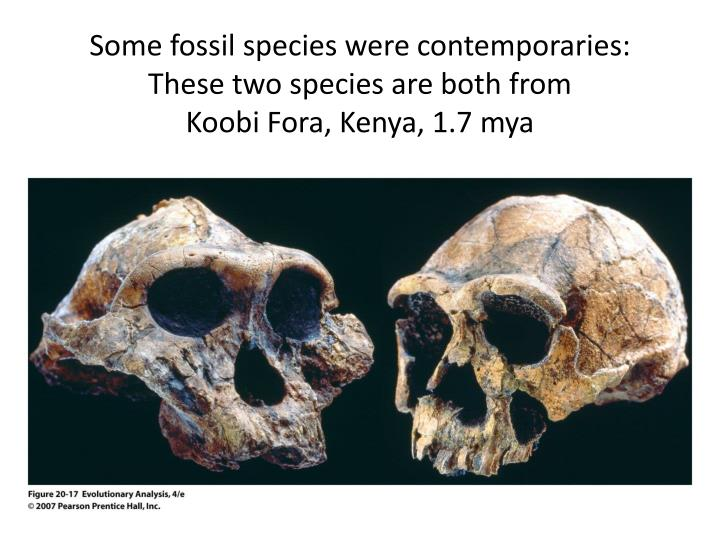 Some fossil species were contemporaries: