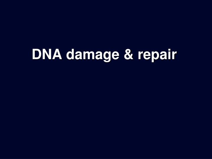 Dna damage repair
