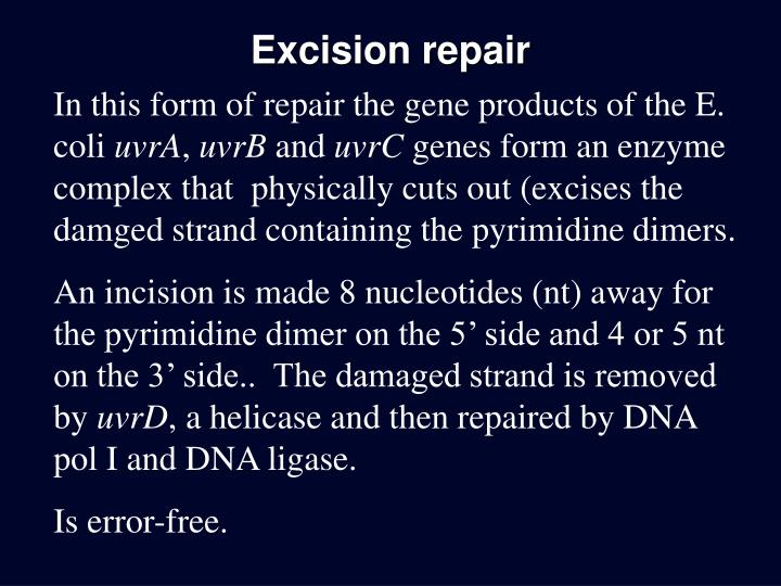 Excision repair